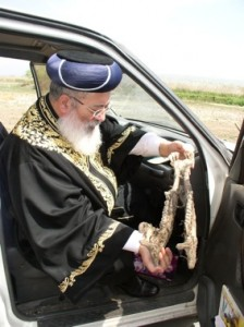 Chief Rabbi Amar in Hula Valley examining teeth of Water BUffalo