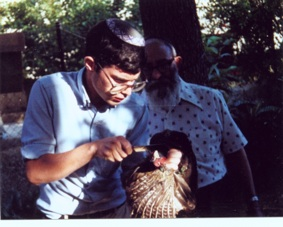 Ari Greenspan shechting a ring necked pheasant with Rav Yosef Kapach -רב יוסף קאפח watching