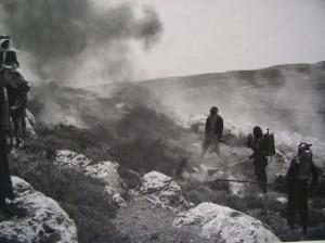 לוחמים עם הארבה בהרי יהודה