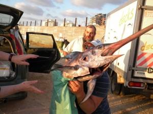 בודקים איך תופסים דגי חרב