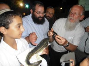 הרב מדן בודק דג הסטרגון